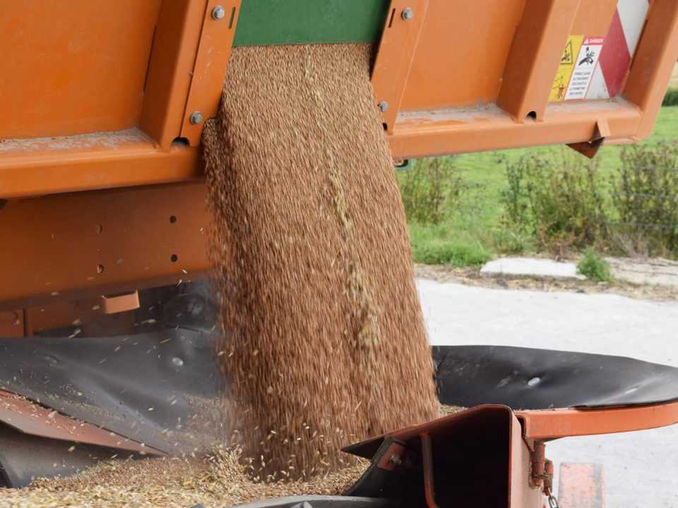 Unloading an agricultural skip with a conveyor belt