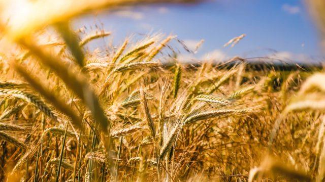 Farming and valorisation of organic product