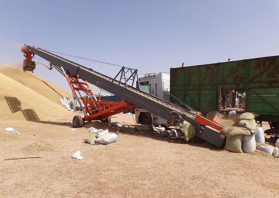 Cereal handling belt conveyor